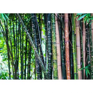 Bamboo Trees Photo Poster. NK WORLD