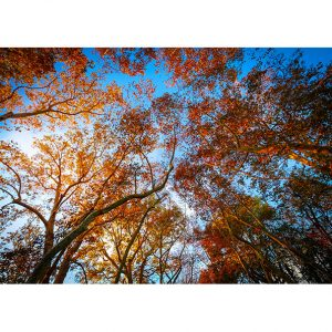 Autumn Trees Photo Poster. NK WORLD