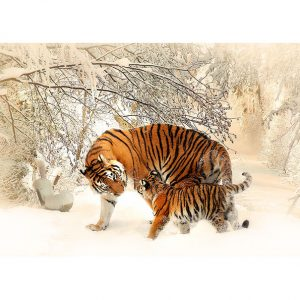 Tigers Photo Poster. NK WORLD