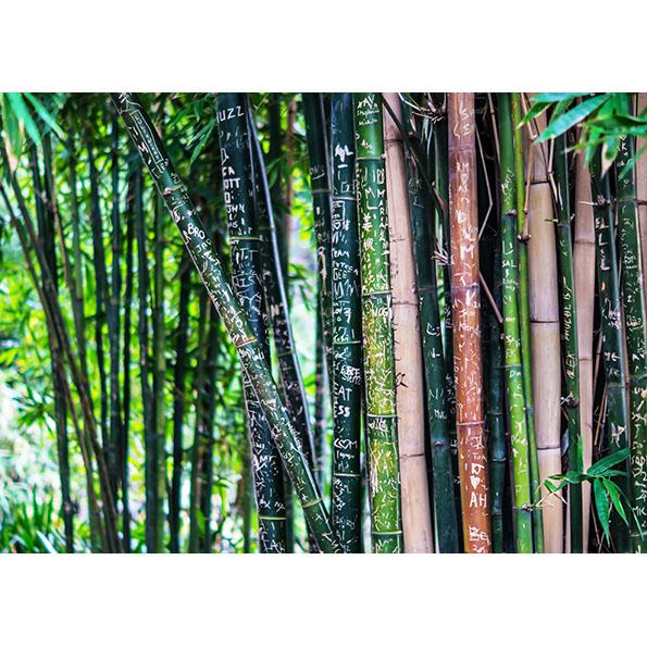 Bamboo Trees Photo Poster. NK WORLD