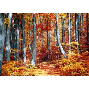Autumn Forest Photo Poster. NK WORLD