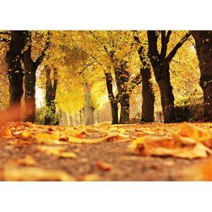 Autumn Path Photo Poster. NK WORLD