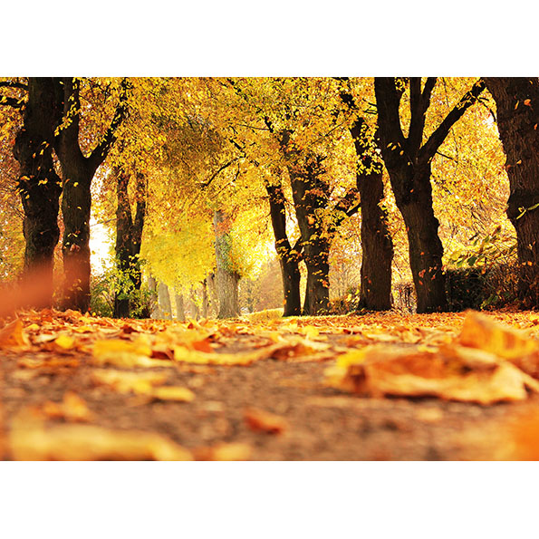 Autumn Path Photo Poster. NK WORLD