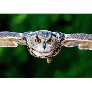 Owl Photo Poster. NK WORLD