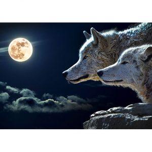 Moon Wolfs Photo Poster. NK WORLD