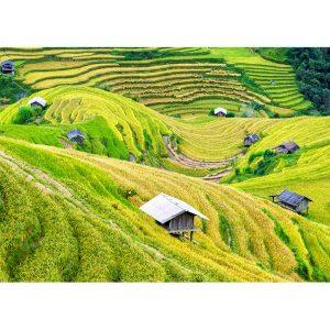 Rice Fields Photo Poster. NK WORLD