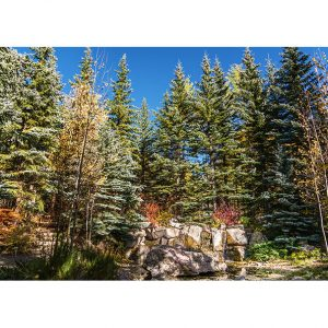 Mountain Forest Photo Poster. NK WORLD