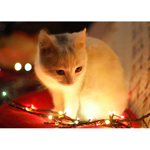 Christmas Cat. Christmas Posters and Postcards. NK WORLD.
